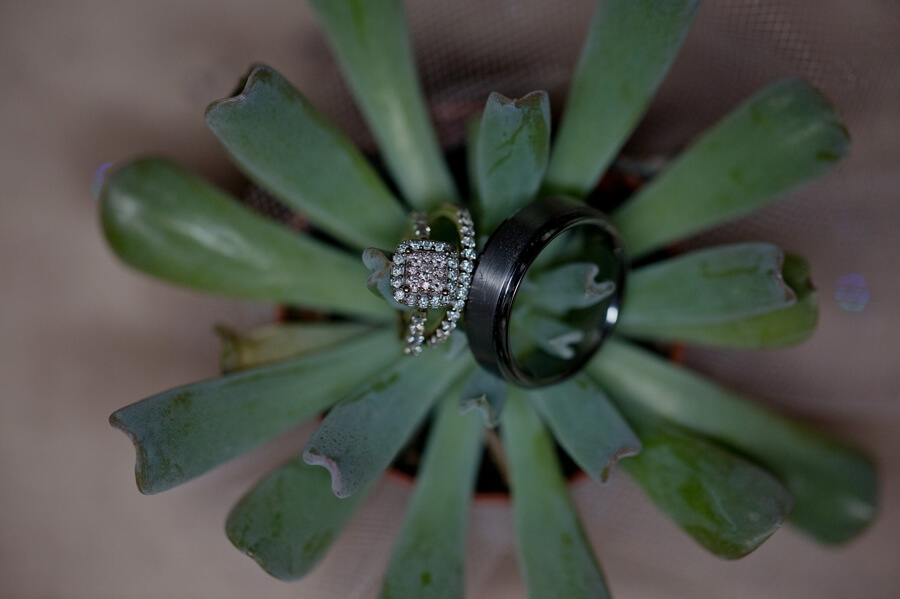 wedding rings in a succulent at The Vault Columbus