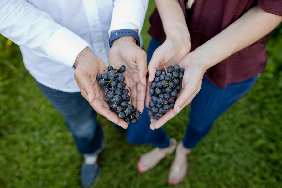 engaged couple holding grapes at vineyard