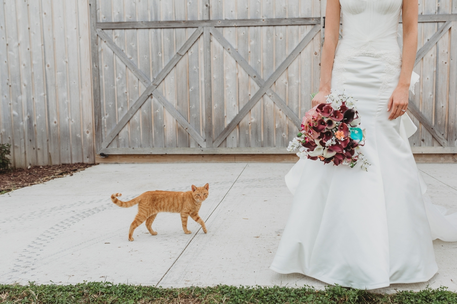 stray cat by bride at wedding