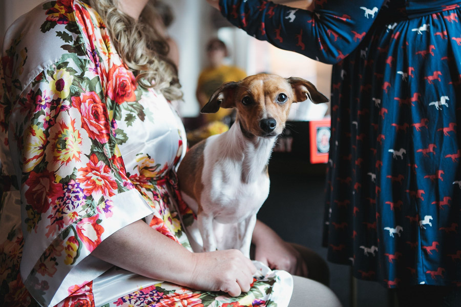 brides dog sitting on her lap