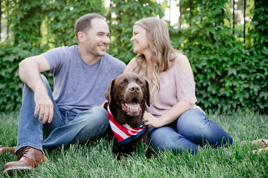 close up of dog at engagement session