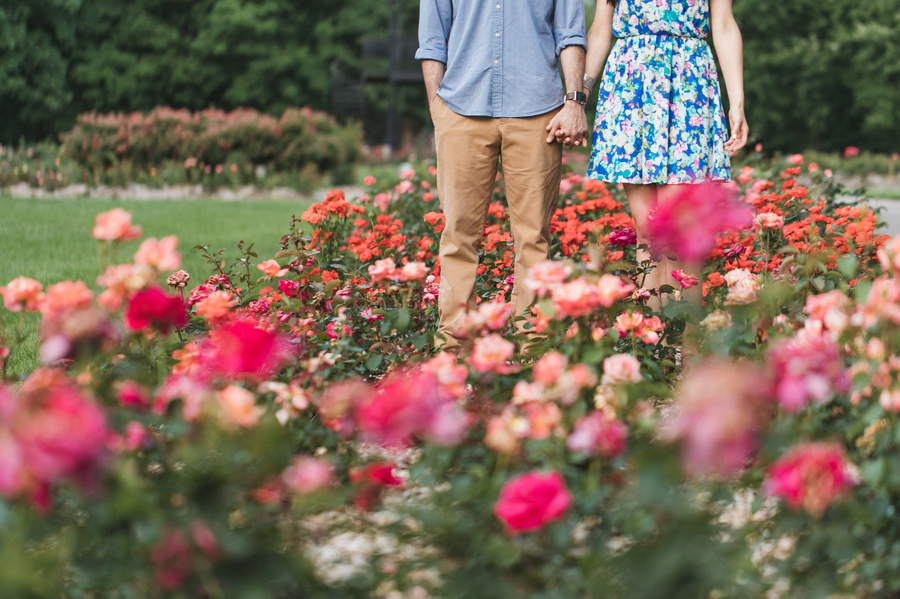 engaged couple holding hands in field of roses